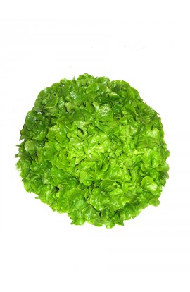 Feuille de chêne verte